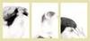 23 (Jordane Prestrot) Tags: jordaneprestrot àcorpsperdu triptych triptyque tríptico autoportrait selfportrait autoretrato blackandwhite noiretblanc blancoynegro hpphotosmartc945