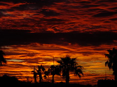 Burning Clouds (Scott Douglas Worldwide) Tags: freedom f flickrunitedaward fairy firesky flower fire flag fountain az arizona awesome america amature atlasta adorable g golden glorious godlike god glow great perfect peaceful p paradise palmtree palm palms palmtress pretty pink beautiful badass b bright bronze