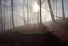 The green Anaconda (Hector Prada) Tags: bosque niebla bruma árbol resplandor luz leaves invierno sol magia espiritual encantado misterioso forest fog mist tree shining light sun sunlight branch magic spiritual enchanted enlightened charmed winter paísvasco basquecountry