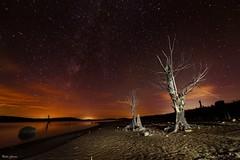 Noche en el pantano (Peideluo) Tags: night cielo arbol tree nigscape landscape sky elitegalleryaoi bestcapturesaoi aoi