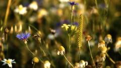 Summer (pszcz9) Tags: przyroda nature natura kwiat flower zbliżenie closeup bokeh beautifulearth sony a77