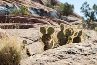 Hidden Mickey in the Desert