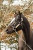 Honor Code (Casey Laughter Media) Tags: stallion racehorse stud studfarm farm lanesend lexington kentucky breeding winner honorcode apindy