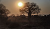 When The Sun Goes Down (AnyMotion) Tags: huts hütten baobab afrikanischeraffenbrotbaum adansoniadigitata sunset sonnenuntergang landscape landschaft 2014 anymotion lowerzambezinationalpark zambia sambia africa afrika travel reisen nature natur wildlife 6d canoneos6d landschaftsaufnahmen