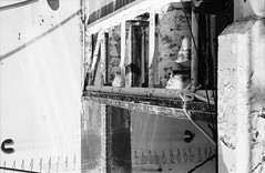 Abstract reflection (spushnof) Tags: bnw bnwphotography bnwmood bnwcaptures bnwsociety blackandwhite blankandwhite bw bwanalog blackandwhitephotography blackandwhitefilm nikon nikonf3 analog analogue analoguephotography analoguevibes analogphotocommunity abstract abstractphotography 35mm 35mmfilmphotography 35mmanalogue 35mmfilm ilford ilfordfilm ilfordhp5 candid film filmphotography filmisnotdead filmrenaissance filmcamera filmrenenaissance filmphoto пленка reflection street streetphotography streetaward streestyle streetphotographer california