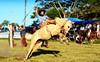 Ricardo Terra (Eduardo Amorim) Tags: gaúcho gaúchos gaucho gauchos cavalos caballos horses chevaux cavalli pferde caballo horse cheval cavallo pferd crioulo criollo crioulos criollos cavalocrioulo cavaloscrioulos caballocriollo caballoscriollos pampa campanha fronteira pelotas riograndedosul brésil brasil sudamérica südamerika suramérica américadosul southamerica amériquedusud americameridionale américadelsur americadelsud cavalo 馬 حصان 马 лошадь ঘোড়া 말 סוס ม้า häst hest hevonen άλογο brazil eduardoamorim gineteada jineteada