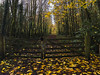 autumn gate (De Lambo) Tags: trees landscape ireland forest leaves gate locked fall yellow woods