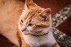 Milo (kmilobaena) Tags: cba colombia photography angel animal beauty color cat cafe gato