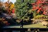 Aichi_Shinrin_16 (Sakak_Flickr) Tags: aichi shinrinpark autumn fall japanesemaple autumnleaves nex5n sigma60f28
