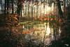 Grumsiner Buchenwald... (angelika.kart) Tags: natur wald buchenwald herbst wasser waldboden bäume blätter sonne spiegelung weltnaturerbe