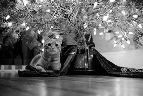 Christmas with Cats!