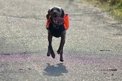 DSC00453 (baylersmith) Tags: minnesota state park nature statepark hunting dog fall