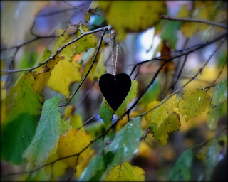 _a heart for foliage