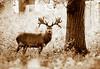 Portrait of a Deer (Outdoorjive) Tags: photo flikr stevepalmerphoto places uk eastanglia walking animals events other norfolk waog holkham england unitedkingdom gb