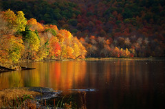Even in the shadows, the trees shine bright their colors (Captions by Nica... (Fieger Photography)) Tags: trees tree forest fall autumn nature reflections reflection water landscape lake outdoor serene mountain quebec canada