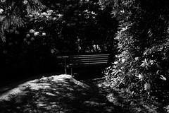 Bench (martyr_67) Tags: bench garden olinda