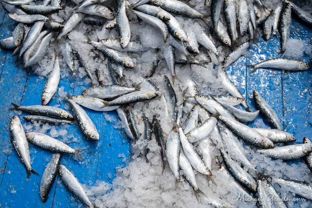 the world s most recently posted photos of fish and sardine flickr