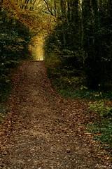 Le chemin (annabuni) Tags: way le chemin dans les bois forêt cardeilhac france haute garonne champêtre sentier automne autumn novembre november anna bunichon sony a58