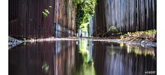 When It Rains It Pours (red stilletto) Tags: stkilda alleyway laneway fence fences graffiti reflection reflections rain puddle puddles wet leaf leaves weed weeds