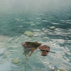 507 Apathetic (Katrina Yu) Tags: selfportrait fairytale 2017 365project lily pad frog surreal fantasy dream water drown emotion creative conceptual concept art