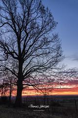 Early Morning Sunrise (Thomas  Johnson Photography) Tags: missouri outside outdoors canon digital 5d markiv 5dmarkiv gorgeous morning sunrise sunset blue orange yellow red silhouette rise riseandshine 2017 thomasjohnsonphotography ©thomasjohnsonphotography ©2017thomasjohnsonphotography field tree fall stunning amazing sky skies sun unitedstates