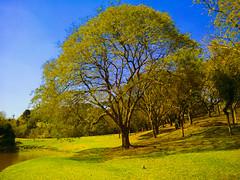 Parque São Lourenço (Eduardo PA) Tags: curitiba paraná nokia pureview microsoft windows phone 950xl lumia wp parque são lourenço