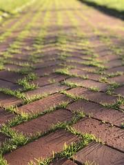brick path (brown_theo) Tags: columbus ohio brick path hammond center