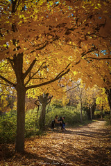 Fuentes del Marques_ 26112017-173-Editar (Pyass2015) Tags: caravaca fuentesdelmarques bosque forrest landscape parque murcia autum otoño