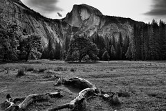 A Meadow Setting for a View to Half Dome (Black & White, Yosemite National Park) (thor_mark ) Tags: blackwhite canvas capturenx2edited centralyosemitesierra colorefexpro cook'smeadow day6 deadtreelimbsonground elmtree evergreens grassymeadow halfdome hillsideoftrees landscape lookingeast mountains mountainsindistance mountainsoffindistance mountainside nature nikond800e outside overcastwithclouds pacificranges photoshopedited portfolio project365 sierranevada trees triptopasoroblesandyosemite washingtoncolumn yosemitenationalpark yosemitevalley yosemiterittersierranevada california unitedstates