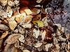 A LAS HOJAS LAS SECA EL TIEMPO. (FOTOS PARA PASAR EL RATO) Tags: árboles fuente viejo agua arbol secas hojas