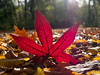 Autumn (shaftina©tion) Tags: autumn fall autmn autumnal brown colorfulcolourful dead decay deceased golden leaf leafy leaves orange orrange red rich trees vibrant vivid wood wooded woodland woodlands woods