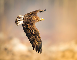 Facing light---Life of Eagle....!