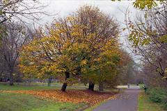 fall (2) (pedro4d) Tags: canon a1 5014 konica vx100 expired film analog polska jesień poland autumn fall polen herbst poznań szeląg nature
