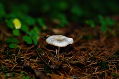 Lonely (Bastian_Schmidt) Tags: mushroom mushrooms pilz pilze wald forest herbst fall autumn sun sonne nikon d5000 nikkor 50mm 18
