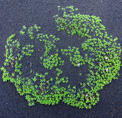 Green and Black (miltonpics) Tags: europe iceland plants easternregion is black green plant rock lava ash leaves flowers