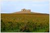 Colori d'autunno (Luciano Schano) Tags: trapaniummari ummari trapani italia sicilia autunno rudere vigneto mediterraneo paesaggio sonyemount55210 sonyilce6000 ilce6000 landscape giallo