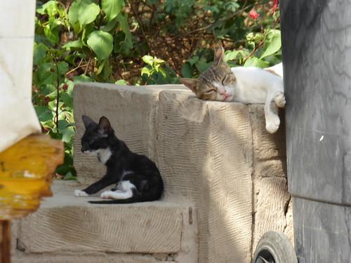 Cats at Philae