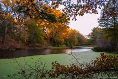 Laurelwood Arboretum_0329 (smack53) Tags: smack53 pond water laurelwoodarboretum wayne newjersey trees autumn autumnseason autumncolors fall fallcolors fallseason foliage scenic nikon d100 nikond100