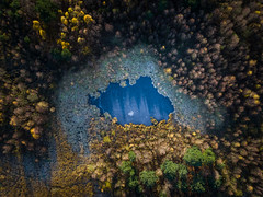 Dragon's Eye (Draws_With_Light) Tags: vegetation aerialphotography landscape season woods skipwithcommon abstract djimft15mmf17asph djiinspire1pro lake pond autumn scene flood sunrise tree woodland forest water camera marshland fields northyorkshire drone places frost