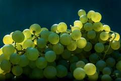 Raisin (PYC5PYC Photography) Tags: raisin vigne vendange fruit vin grappes suisse swiss switzerland grains pyc5pyc pyc5pycphotography pycassaut nature raisinsblancs 2017 duillier vaud