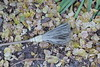 El descanso del guerrero (JFUER) Tags: otoño manubles escoba torrijodelacañada zaragoza aragón