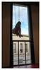 Camille Henrot au Palais de Tokyo (Paris). (jjlm-fr) Tags: camillehenrot palaisdetokyo