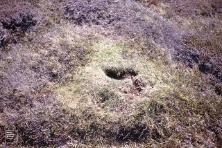 Change from sclerophyllous to nitrophilous. Rabbit burrows. Cape Clear
