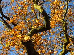 Hampstead Heath (Laura Nolte) Tags: hampstead heath hampsteadheath autumn london park england