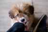 DSCF7865 (aaroncaley) Tags: vietnam ninhbinh animal dog puppy