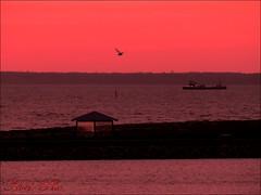 En enlig fugl - på træk. (Noel-Pix) Tags: solopgang pavillon