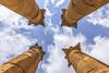 Columns [JO] (ta92310) Tags: travel summer 2017 jordan jordanie sunset soleil western asia kingdom arabic middle east moyen orient amman romain roman citadel citadelle muse museum past architecture temple colonne column ruins ruines jerash gerasa colonnaded
