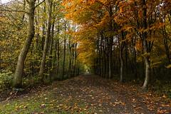 Autumn (Thomas Verleene) Tags: autumn automne couleur arbre arbres forêt feuille feuilles orange color colors tree trees france french road route routes amateur amateurs nature