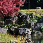 Duck at Koishikawa Korakuen Garden (小石川後楽園)