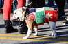 Bulldog On Parade, Hampden (meg21210) Tags: bulldog mayorschristmasparade hampden baltimore maryland 36thstreet coat christmas